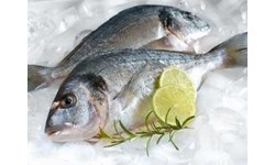 ikan beku